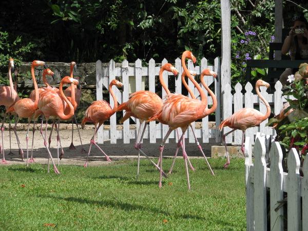Marching flamingos!