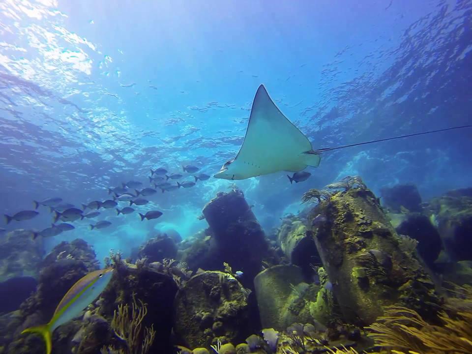 Gambier Reef