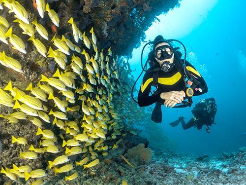 Exploring the beautiful sea life.