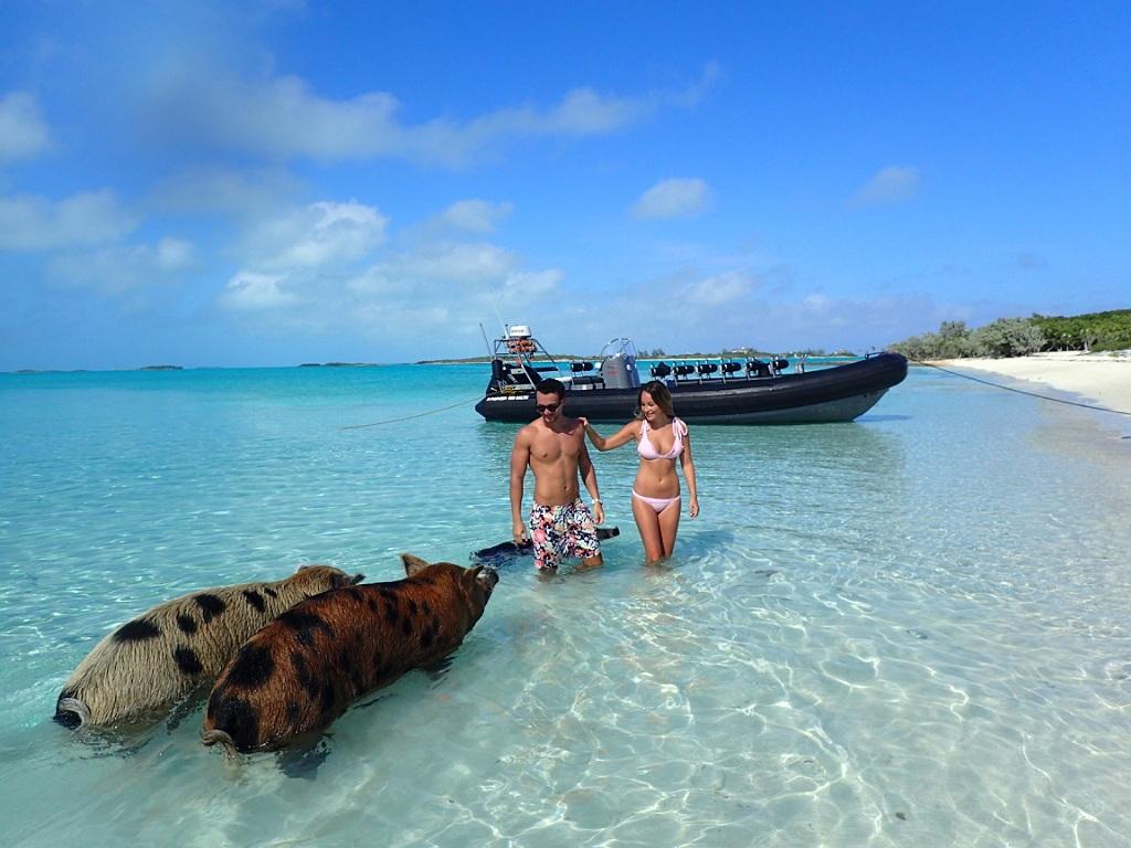 Harbour Safaris Swimming Pigs