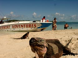 The extravagant inhabitants of Allan's Cay