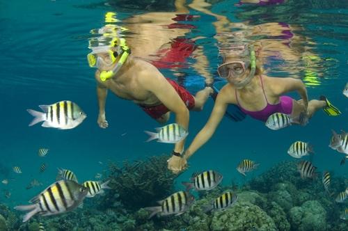 Explore amazing reefs...